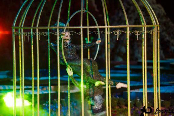 Birds in a cage for weddings