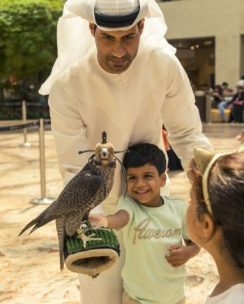 Falcon Display in the UAE