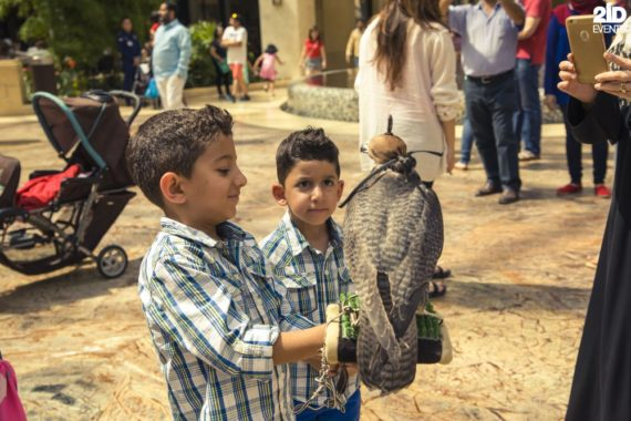 Falcon Display for festivals
