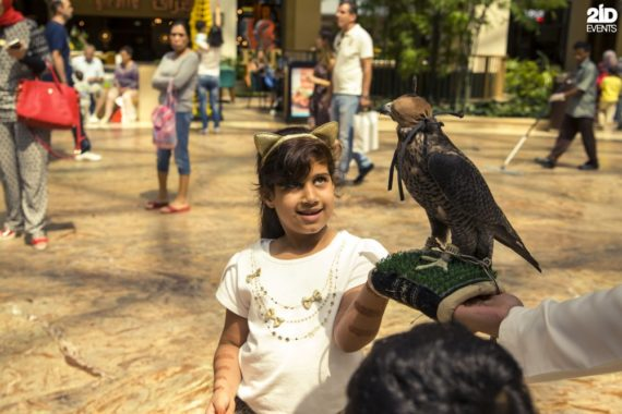 Falcon Display for mall activities