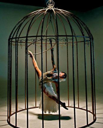 Bird in cage performance in Dubai