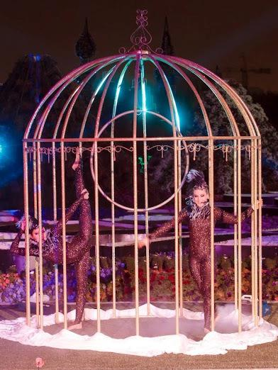 Stage show birds in a cage in Dubai