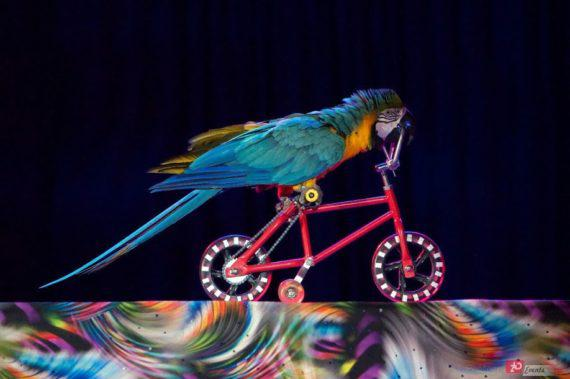 Parrots performance in Dubai